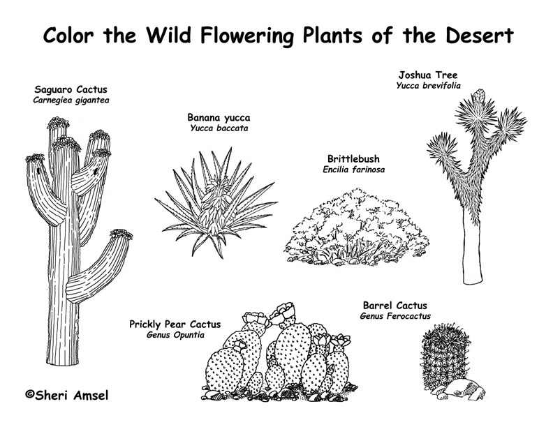 In The Desert clipart different kind plant Dioramas books for  Plants