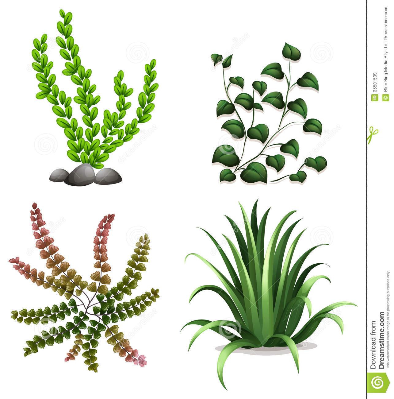 In The Desert clipart different kind plant Plants  Aquarium Clipart