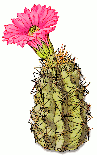 Herbs clipart cactus plant Cactus Cactus Clipart  and