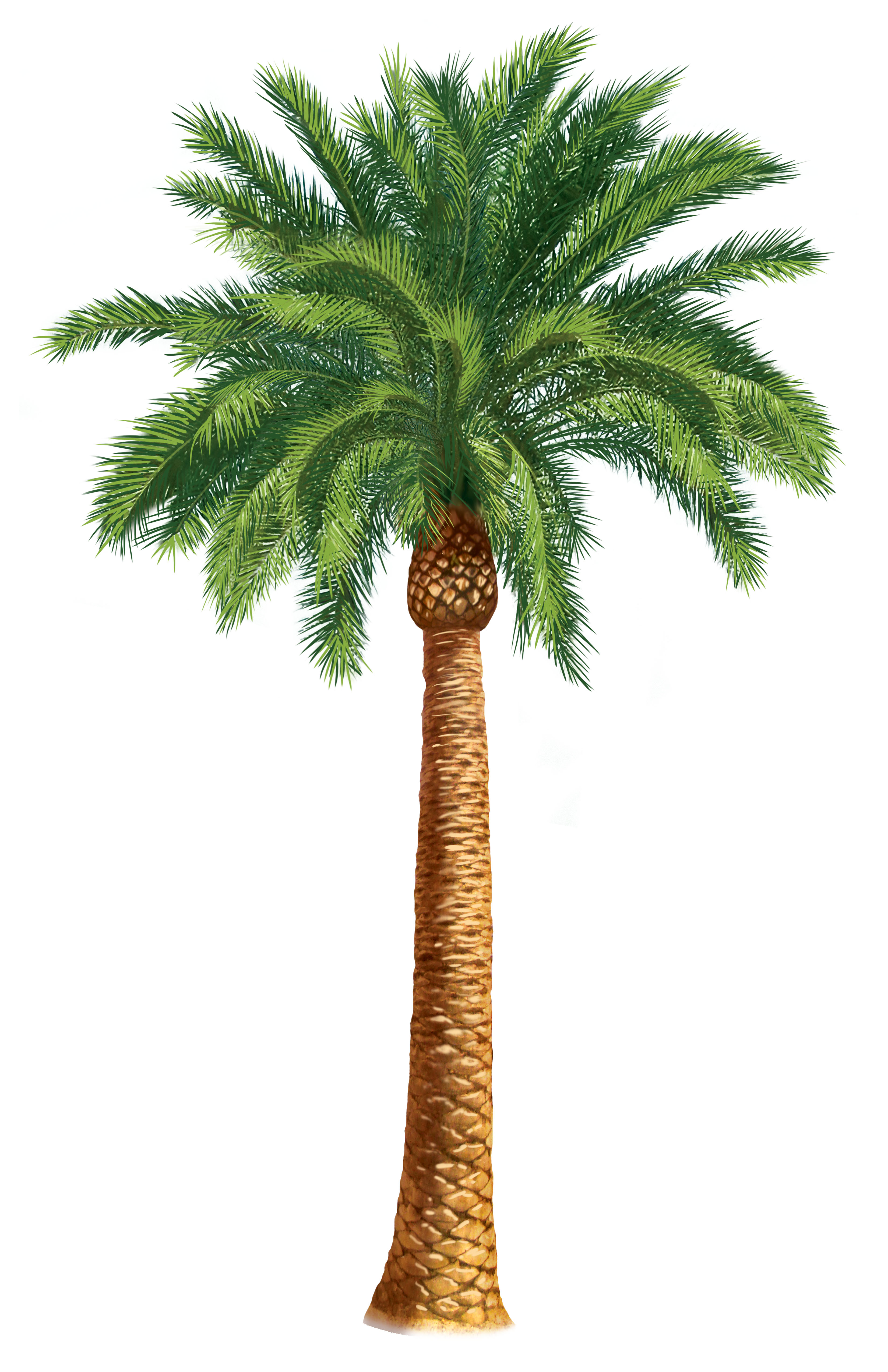 In The Desert clipart different kind plant Clipartwork Clipart — Clipart Free