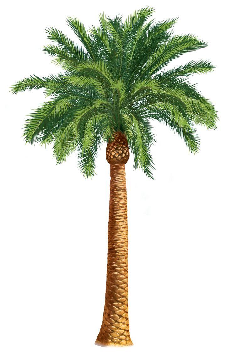 Palm Tree clipart drawn Units + on 25+ Palm