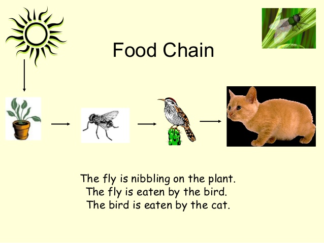 In The Desert clipart forest habitat (1) for 34 Habitats and