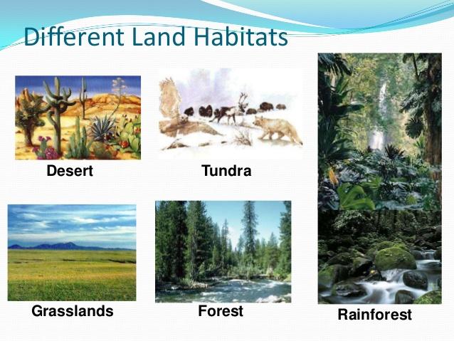 In The Desert clipart forest habitat The Forest 65 Rain living