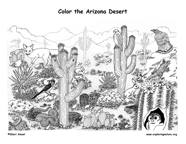 In The Desert clipart forest habitat Arctic <b>habitat</b> <b>desert</b> b>desert</b>