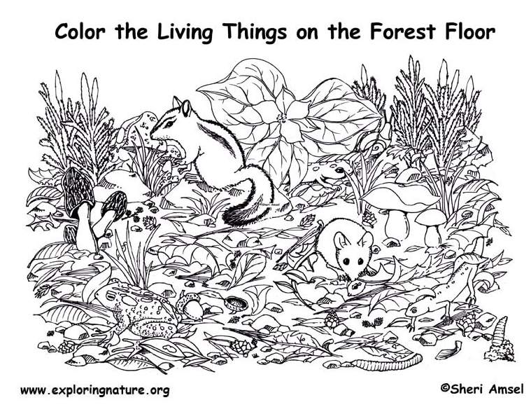 In The Desert clipart forest habitat Life: Worksheets Simply » Kratts
