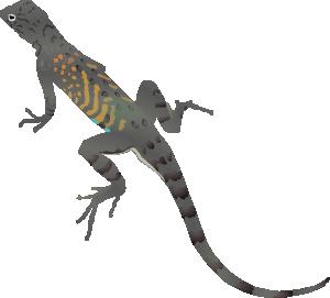 In The Desert clipart gecko Art Az com Clip vector