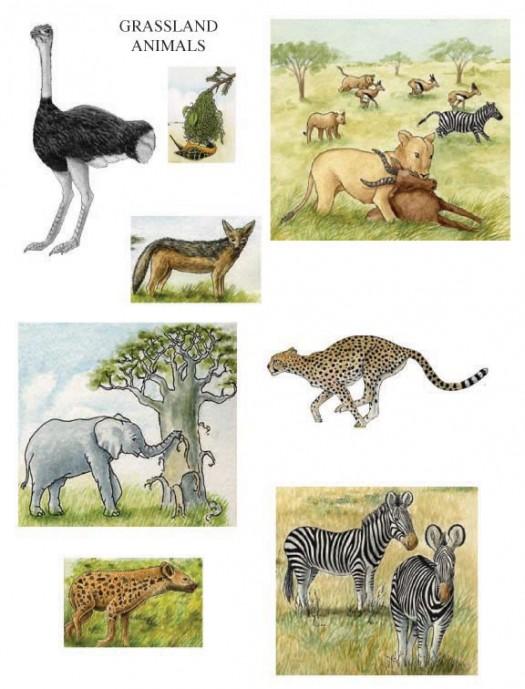 Savannah clipart grassland animal #15