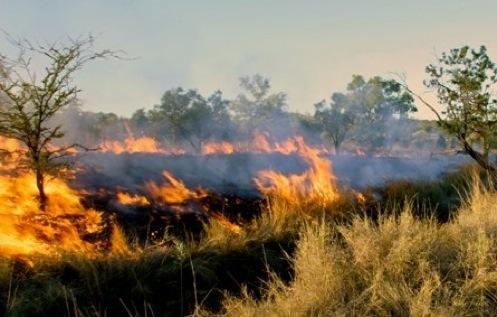 In The Desert clipart grassland habitat Image Grasslands Fires Kids for