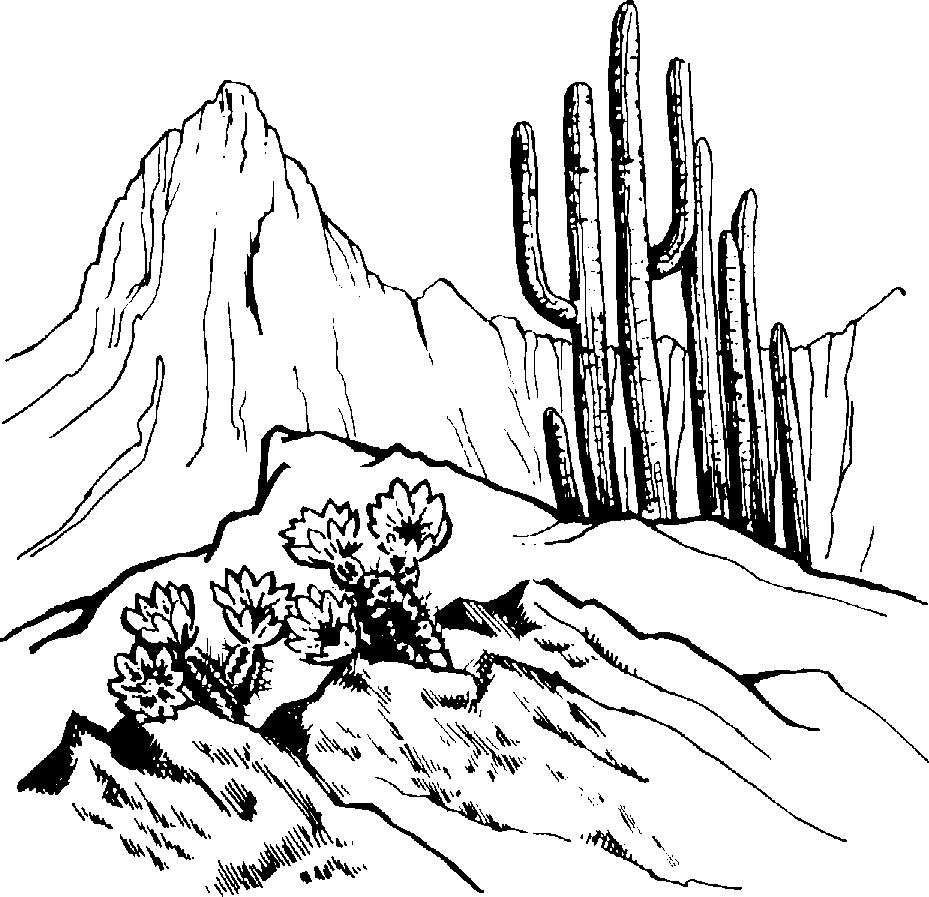 In The Desert clipart outline Desert Page Biome Desert Desert