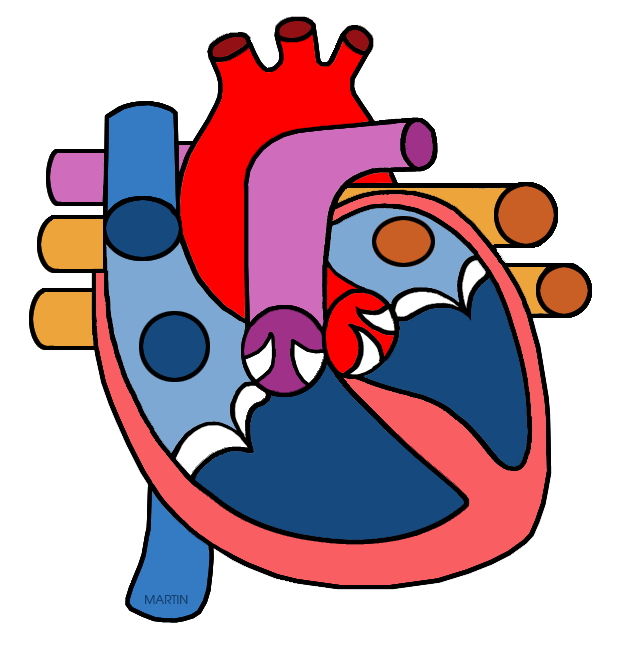 Science clipart heart #12
