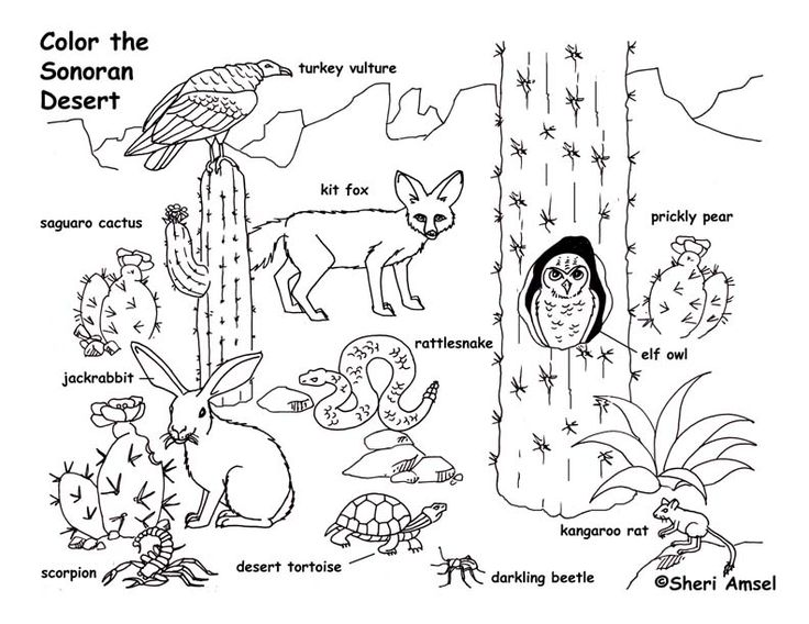 In The Desert clipart plants and animal Desert Best Pinterest Page 25+