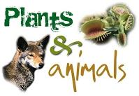 In The Desert clipart plants and animal Desert Utah Animals Habitats Plants