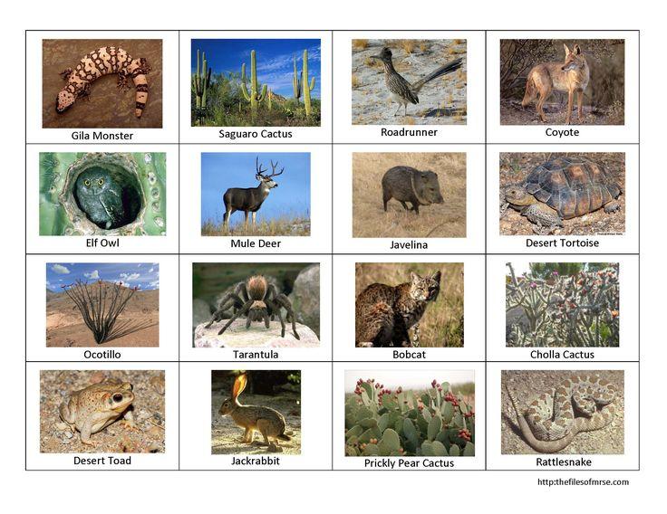 In The Desert clipart plants and animal Desert Best ideas Pinterest More