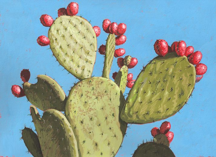 In The Desert clipart prickly pear cactus About best on 28 Cactus