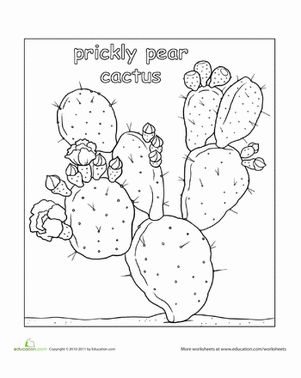 In The Desert clipart prickly pear cactus On images Color Pear best