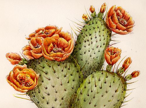 In The Desert clipart prickly pear cactus Cactus Prickly  Prickly Watercolor
