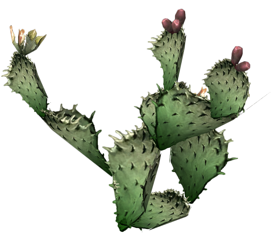 In The Desert clipart prickly pear cactus Clip Free Free Free Art