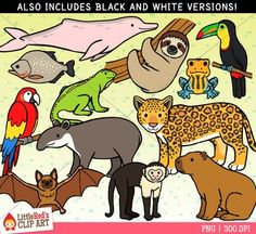 In The Desert clipart rainforest animal Animals animals art Clipart and