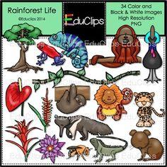 In The Desert clipart rainforest animal Life Art (38 on Educlips