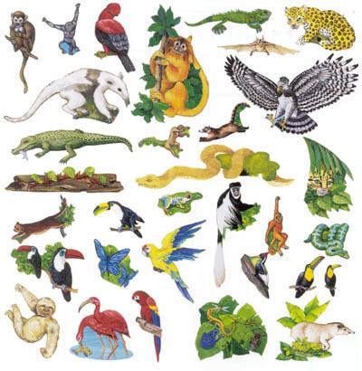In The Desert clipart rainforest animal Felt  Kits & Boards