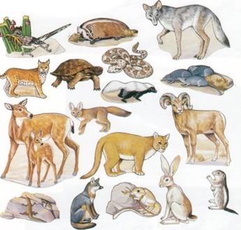 In The Desert clipart rainforest animal Primary Animals School roxaboxen Animals