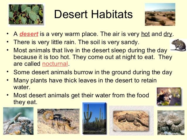 In The Desert clipart rainforest habitat 5 Rainforest Different Habitats and