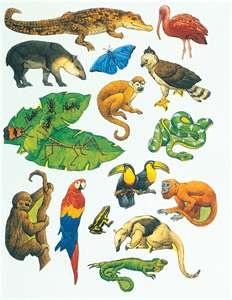 In The Desert clipart rainforest habitat Jungle/Desert most Ideas on very