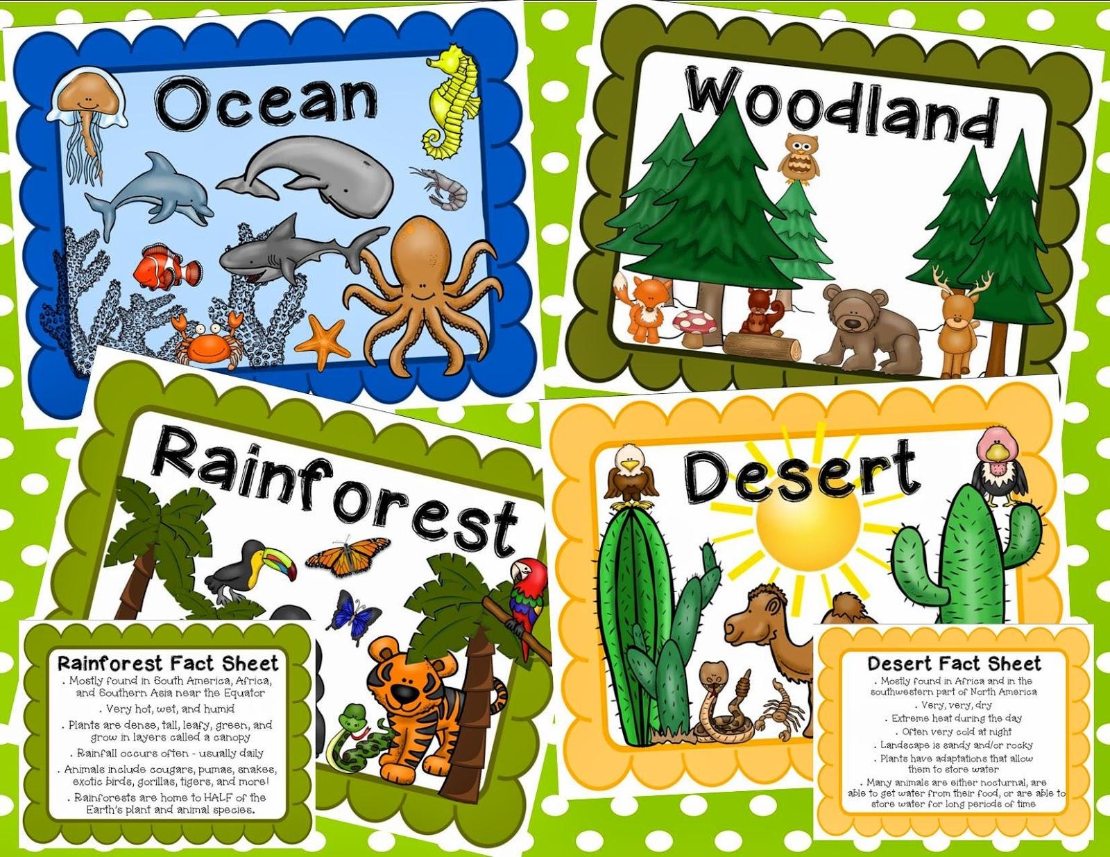 In The Desert clipart rainforest habitat Habitat Habitat Animals Their Forest