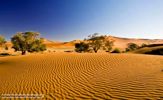 In The Desert clipart region A I that Biology my
