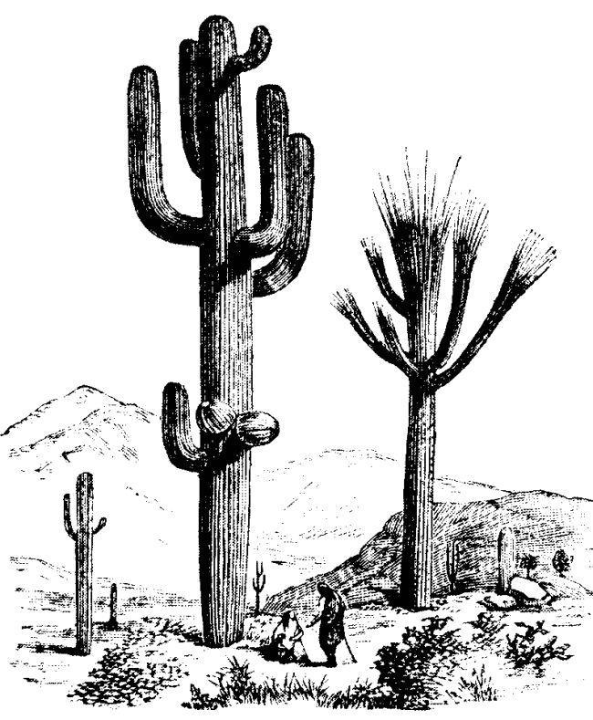 In The Desert clipart saguaro Cactus clip Saguaro  art
