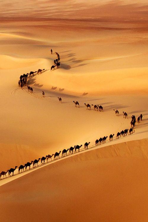 In The Desert clipart saudi arabia On Camel Arabia Saudi UAE