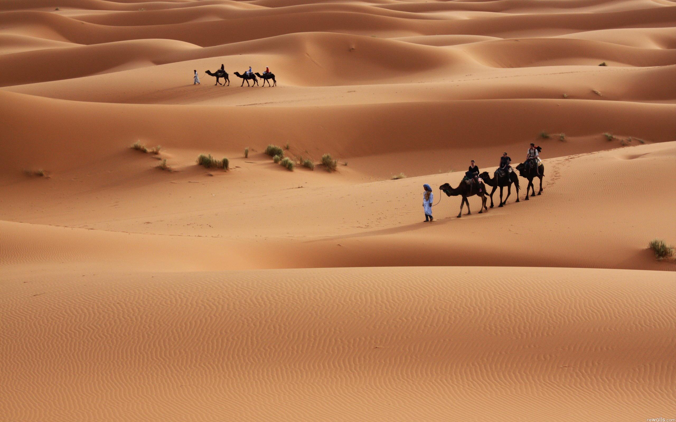 In The Desert clipart saudi arabia Sahara desert Desert Clipart Wallpapers