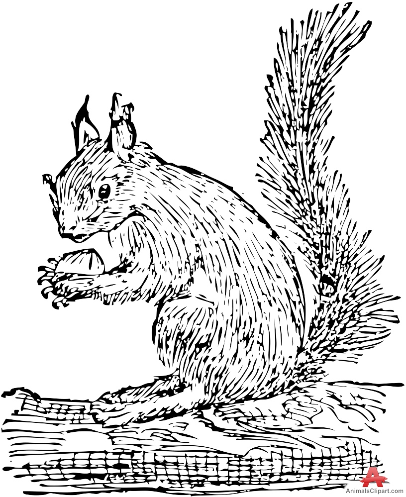 In The Desert clipart squirrel Drawing Drawing Download Clipart Squirrel