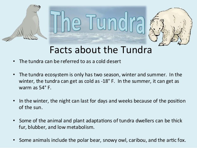 In The Desert clipart tundra biome About the ecosystems Facts 5