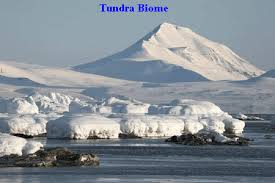 In The Desert clipart tundra biome Is of north located extending