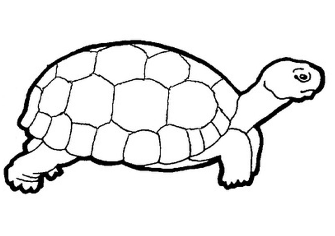 Tortoise clipart black and white #4