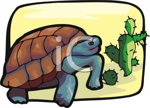 In The Desert clipart turtle Clipart Turtle Royalty Desert A