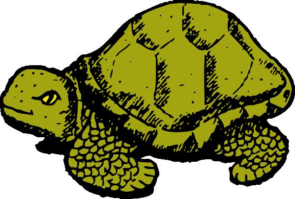 Reptile clipart turtle #8