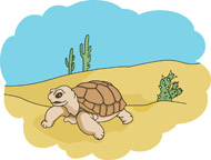 In The Desert clipart turtle Pictures Search desert for reptiles_desert
