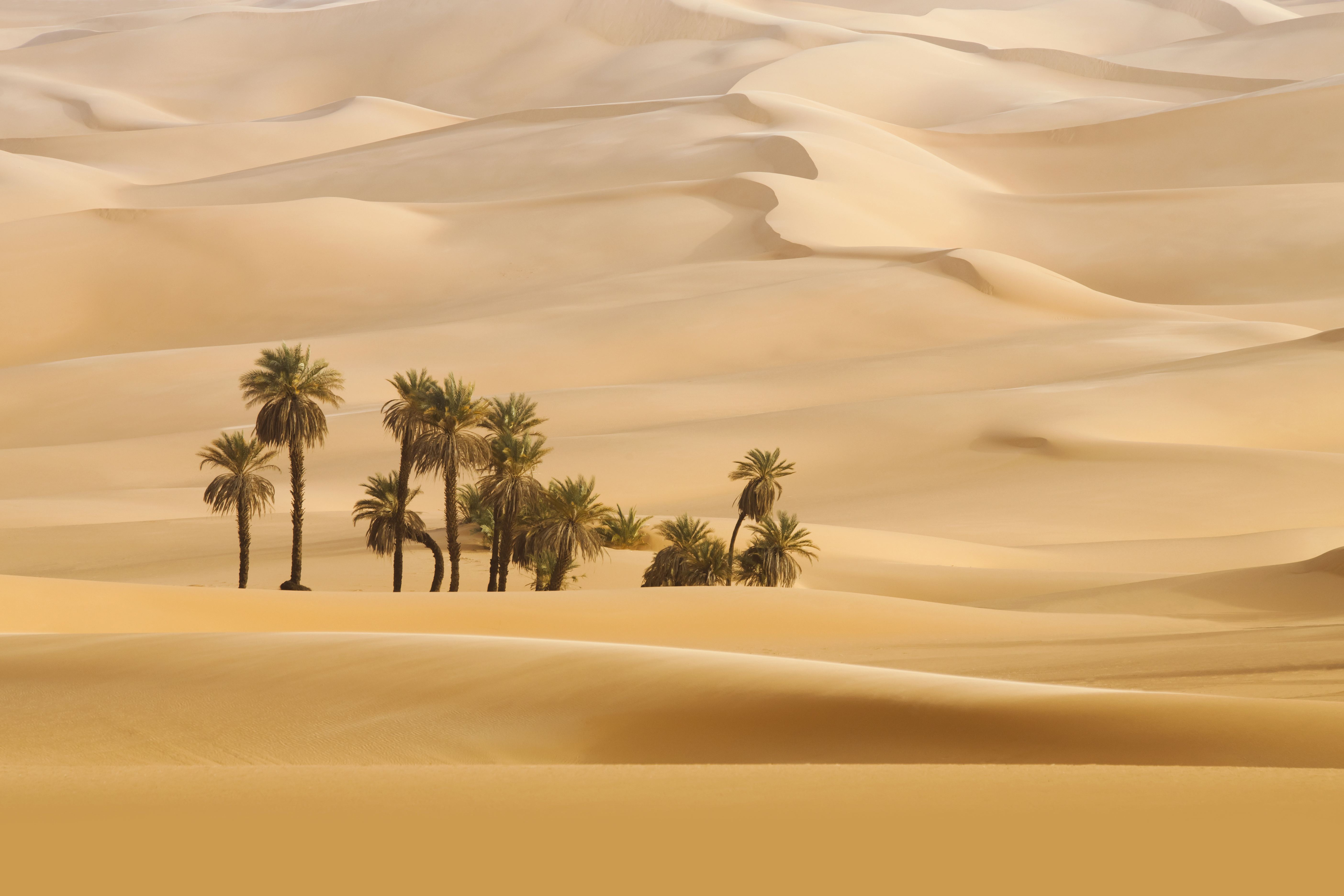 In The Desert clipart wallpaper Size Palms Wallpaper Gallery in