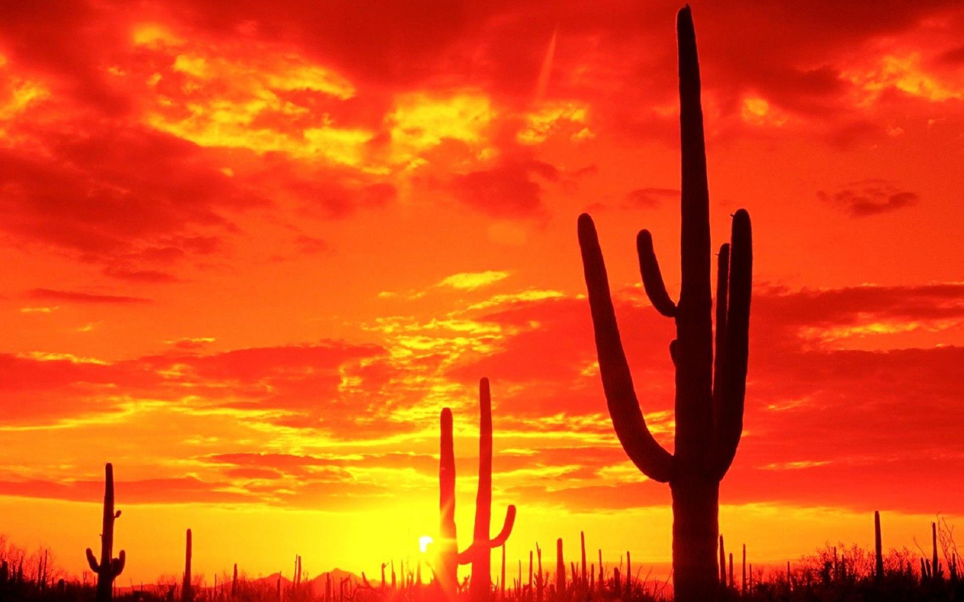In The Desert clipart wallpaper Wallpaper Cactus clipart Hd Desert