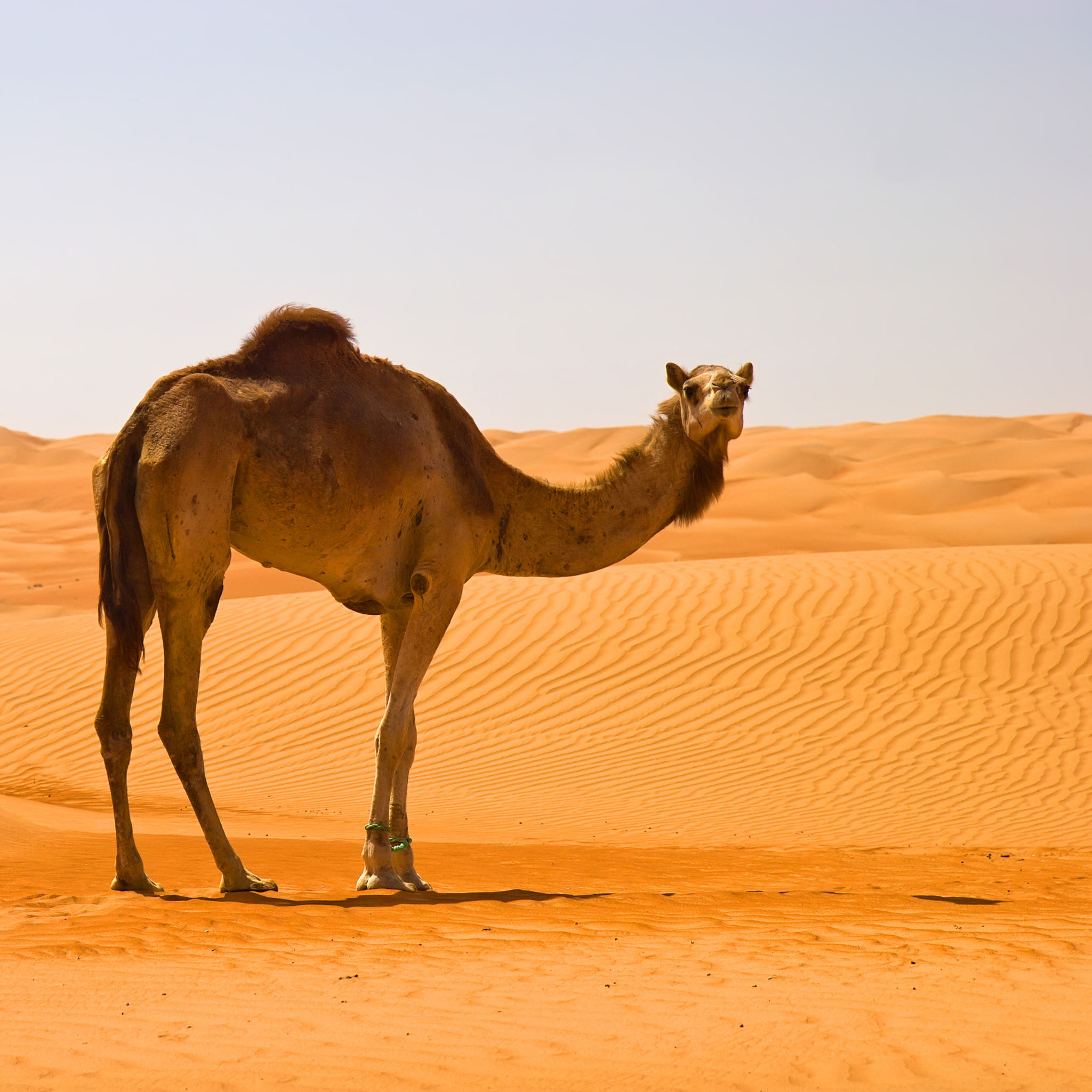In The Desert clipart wallpaper (p HDQ Wallpapers and 79)