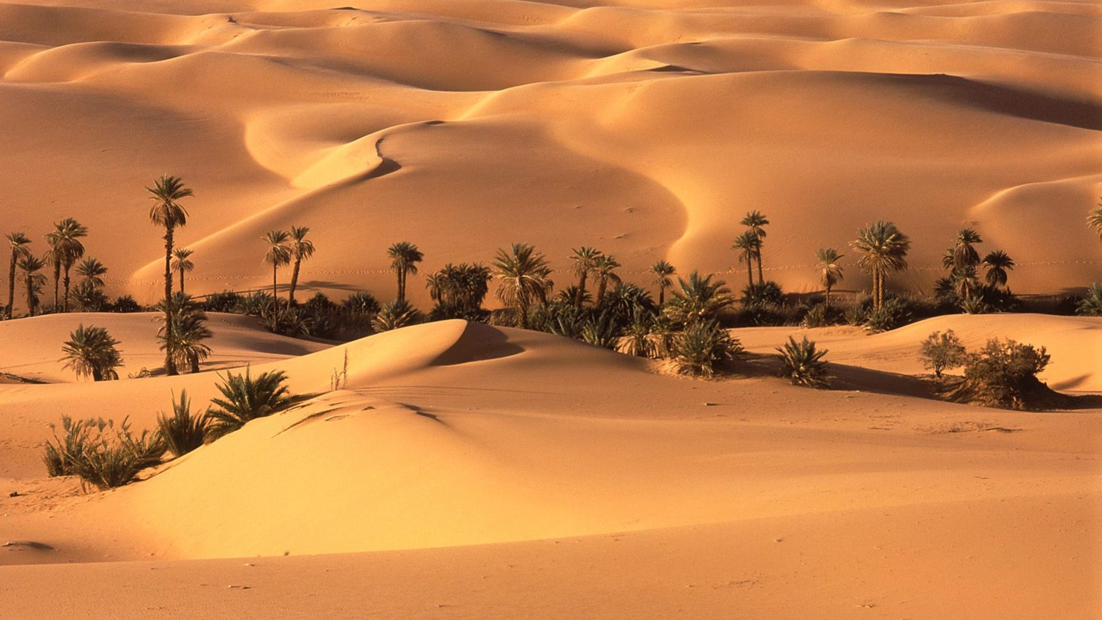 In The Desert clipart wallpaper Wallpapers Desktop Wallpapers Desktop Background