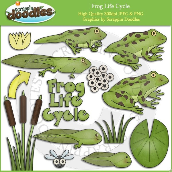 Amphibian clipart frog cycle Play images Art Life 129