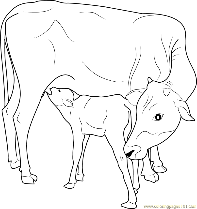 Drawn cattle printable #1
