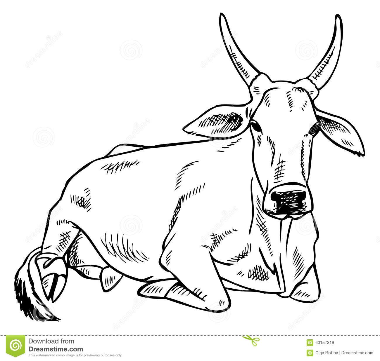 Bull clipart indian Bull bull cow clipart Clipground