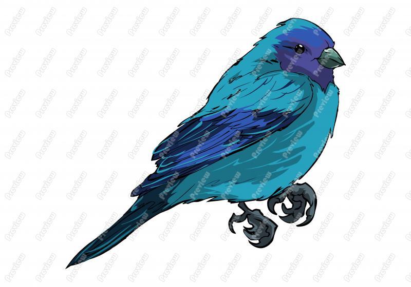 Indigo clipart Clip Clip Free Realistic Bird