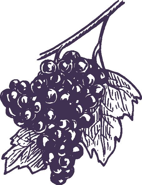Indigo clipart Vector Grapes online Download Clker
