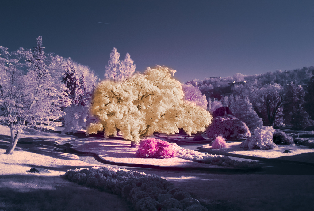 Infrared clipart Infrared Examples Impressive Infrared  Photography Impressive