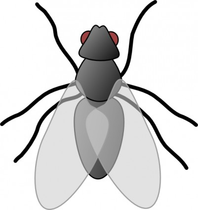 Insect clipart Clipart Images Panda bug%20clipart Clipart